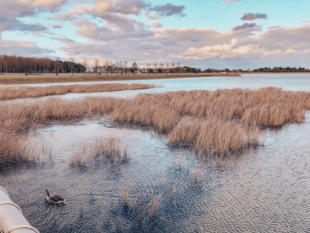 Ein See im Park